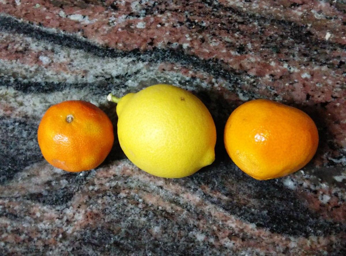 Guía para plantar un mandarino en casa.