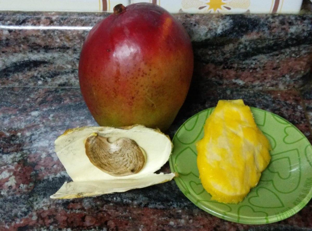 Guía para plantar un mango en casa.