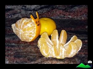 caracol de mandarinas