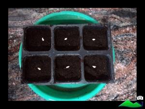 semillero de granada
