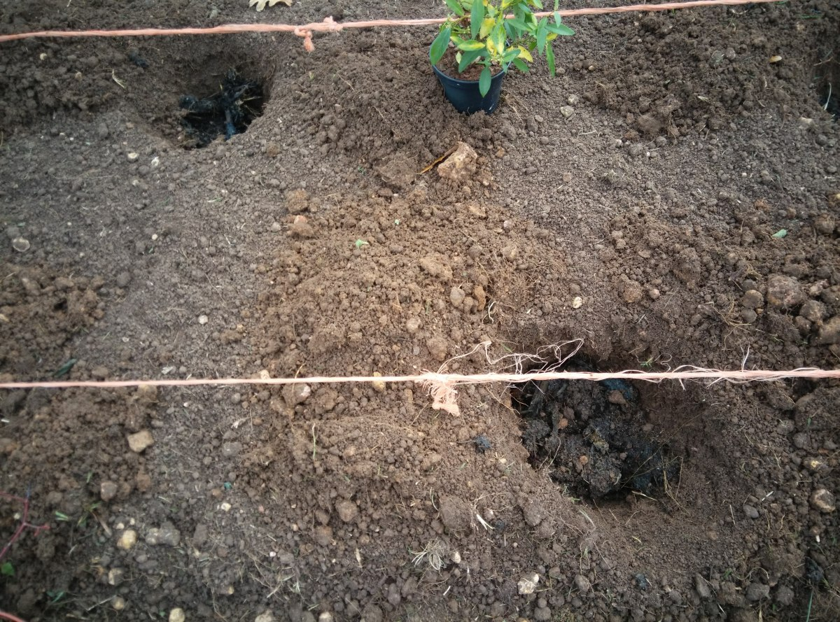 Cómo preparar el terreno para plantar arbustos.