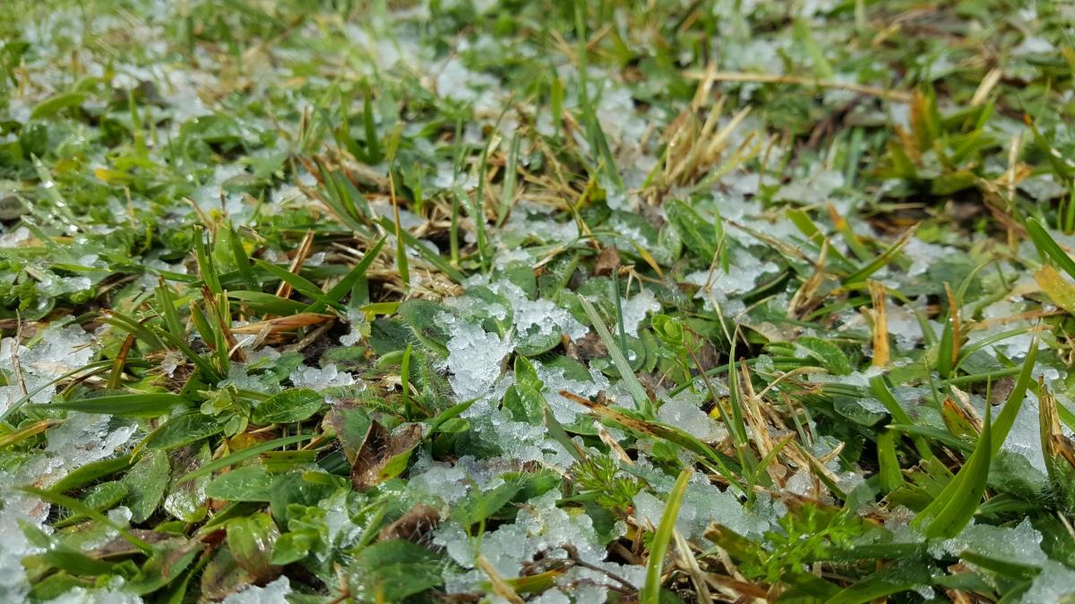 ¿Qué son las horas de frío en las plantas?